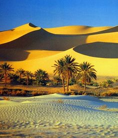 Sahara desert and oasis--- OOOH!