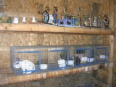 How to build hanging cages of wire Show Rabbits, Meat Rabbits, Large Rabbits, Raising Rabbits, Rabbit Hutch Indoor, Large Rabbit Hutch, Rabbit Hutches, Wire Rabbit Cages, Bunny Cages
