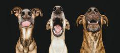 Hundefotografie von Elke Vogelsang - Hundefotografin Hildesheim Hundefotograf Hannover Hundebilder Braunschweig Goslar Göttingen Elze Osnabrück Wolfsburg Göttingen Salzgitter Celle Hameln