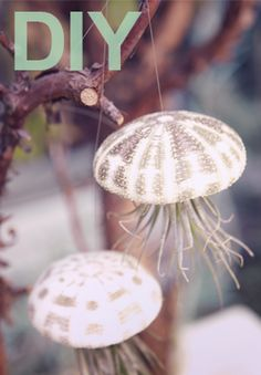 DIY: HOW TO MAKE JELLYFISH AIR PLANTS