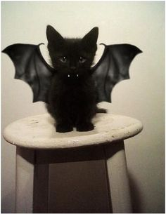 Probably one of the cutest vampires I have ever seen.