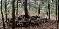 Forest farming vs. forest gardening: what's the difference? | Farming the Woods