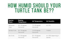 How Humid Should Your Turtle Tank Be Turtle Care, Pet Turtle, Slider