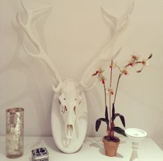 Real deer skull, horns hand painted in washed white