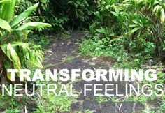 Increase your joy in life by mindfully considering what neutral feelings are and how to transform them.