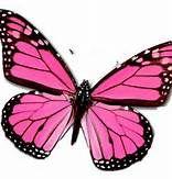 butterflies - Bing Images