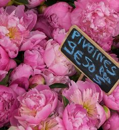 Peony or paeony - plants in the genus Paeonia, the only genus in the flowering plant family Paeoniaceae.