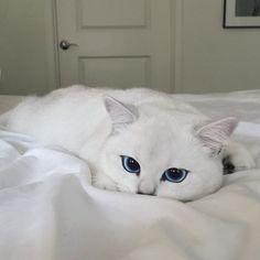 Den här katten har de vackraste ögon jag sett. Vilken förtrollande skönhet!