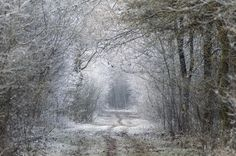 brown, forest, road, trail, tree, trees