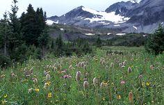 Ozalenka Valley, B.C.