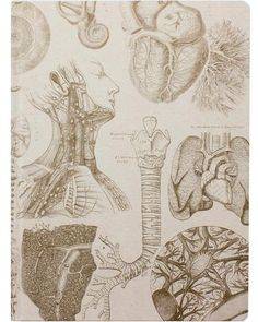 The Theory Extra Large Hardcover Notebook The Anatomy XL Journal features vintage medical drawings rendered in sepia on a light brown field. These are classic illustrations showing the complexity of o
