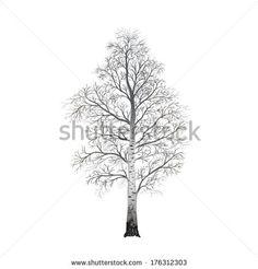 Birch Tree Stock Photos, Birch Tree Stock Photography, Birch Tree Stock Images : Shutterstock.com