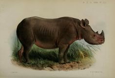 Zoological Society of London..1833-1965.Planche naturaliste /Zoologie…