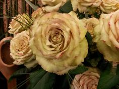 #Rose #Rosa #Hypnose; Available at www.barendsens.nl