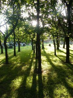 Avonhead Park