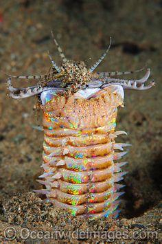 114 Best Sea Life Images On Pinterest Marine Life Underwater