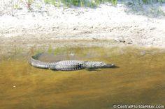 mccarthy animal sanctuary - Google Search