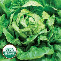 Winter Density Organic Lettuce - Seed Savers Exchange