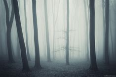 Foreboding Forest Photography - The Forests of Romania Shot by PhotoCosma is Eerily Alluring (GALLERY) Forest Photography, Creative Photography, Fine Art Photography, Amazing Photography, Haunted Woods, Haunted Forest, Surreal Photos, Fantasy Forest, Colossal Art