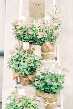 Sabrina and Tim's Garden Wedding in Austria  | table plan on matching herbs placed on a wooden ladder