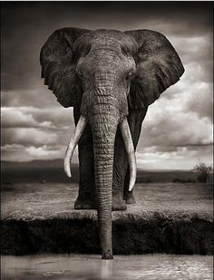 Wild Life | I chose this picture because it shows a lot of depth and shows every line and wrinkle in the elephant