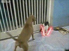 Funny Star Wars Jedi Cat Gif