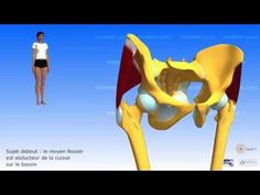 Les rhomboïdes et l'élévateur de la scapula - YouTube