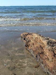 """Driftwood on Mairangi Bay Beach, New Zealand"" by Peter Harrison"