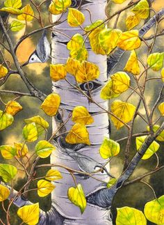 A pair of Nuthatches enjoying a warm autumn afternoon in an Aspen tree. Prints, cards and the original watercolor painting are available at www.catherinemcelroy.com  #artforsale