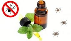spider repellent Add 10 to 15 drops of peppermint essential oil into a spray bottle with 8 to 12 ounces of water. Spray  around door frames, windows, small cracks, corners of the ceilings and bathrooms