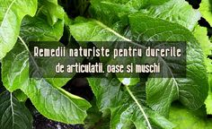 Natural Health Remedies, Plant Leaves, Healthy, Plants, Decor, Decoration, Plant, Decorating, Health