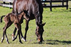 First foal of the year is a filly out of Marketing Mix by Tapit.  Pretty exciting day for Glen Hill Farm:)