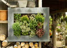 Seriously, can't get enough of the picture frame vertical garden!