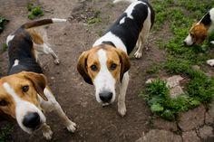 10 Out of Fashion Dog Breeds That Still Make Wonderful Companions