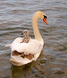 Baby on Board Source