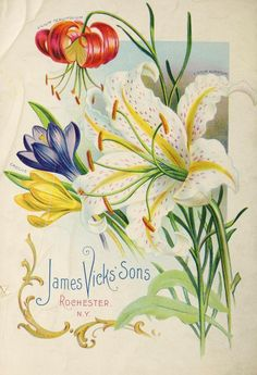 1900 - Vick's catalogue : - Biodiversity Heritage Library