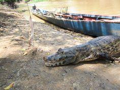 Cost breakdown - Pampas vs Jungle Tour in Bolivia's Amazon