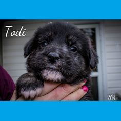 Introducing one of Cara's pups Todi! Not quite available for adoption yet but will be available in April! Contact adopt@pawsitivematch.org for more info or to apply.