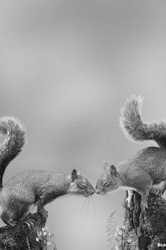 Squirrel love @Bridget Timbrook