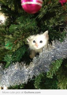 Cutest Christmas tree decoration ever - goaww.com