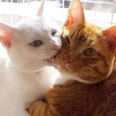 62 Ideas for cats and kittens funny gatos Baby Animals, Funny Animals, Cute Animals, Nature Animals, Cute Kittens, Cats And Kittens, Orange Kittens, Tabby Cats, I Love Cats