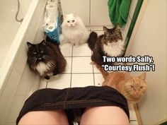 What Your Pets Are Really Thinking While They Watch You Go To The Bathroom  20 Pics