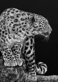 Amur Leopard | 5x7 scratchboard | Melissa Helene Fine Arts + Photography www.melissahelene.com #art #artwork #scratchboard #scratchart #wildlife #animalart #cat #bigcat #endangeredspecies #conservation #conservationart #blackandwhite