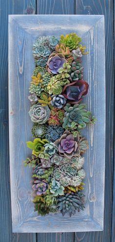 28 x 12 enmarcado suculentas Vertical por SucculentWonderland