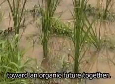 Stil from Yet We Sow. after Fukushima. Farmers plant grasses to clean the soil