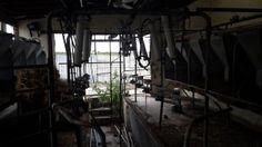 The Old Dairy left in disrepair