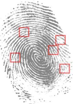 Impressão Digital, Detetive, Penal