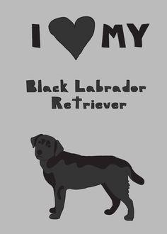 I love my Black Labrador Retriever