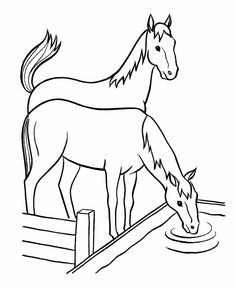 Horse coloring page Shetland Pony Coloring Book Pictures