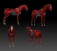 Horse Muscles | UArtsy